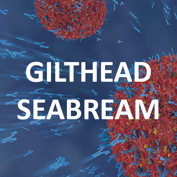 Gilthead Seabream Antibodies